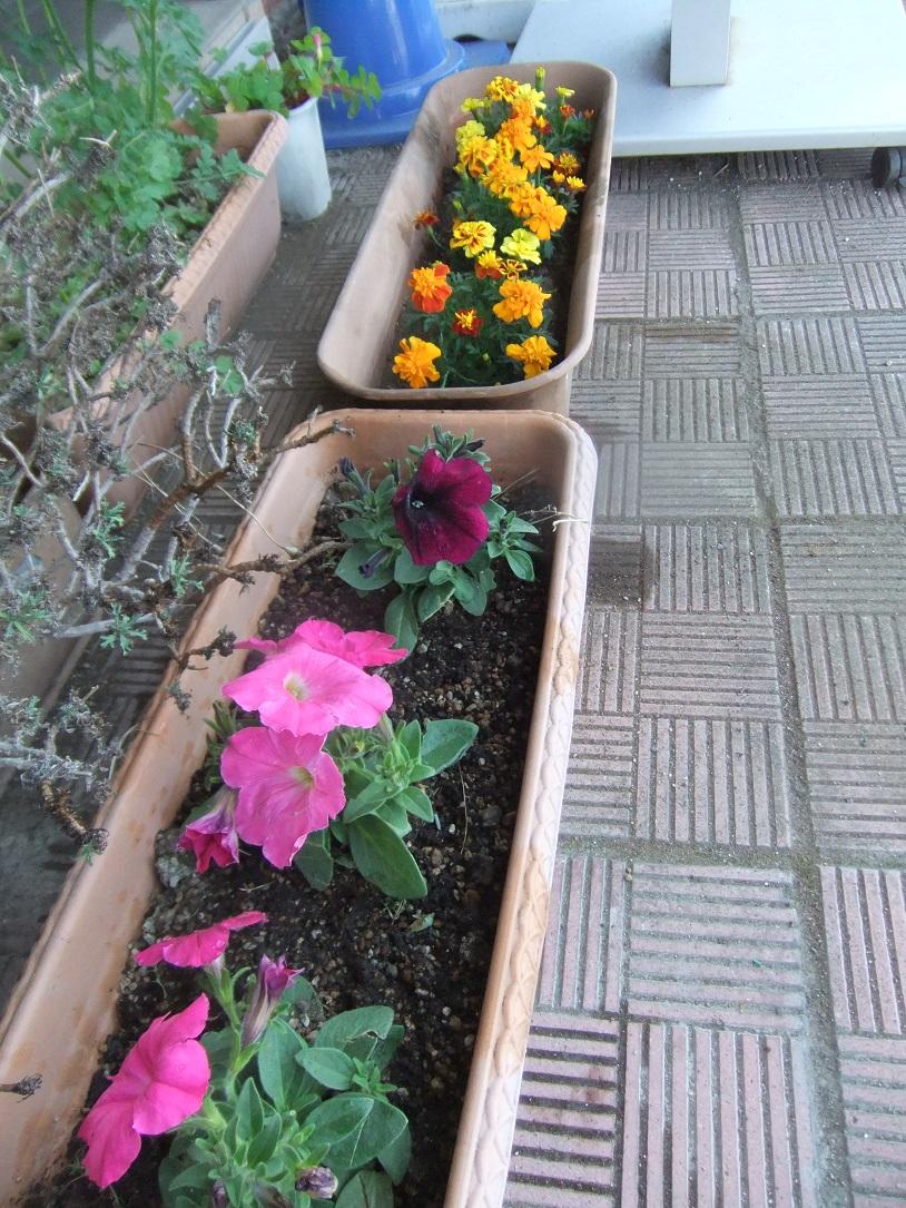 お花を植えました