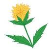 花を食べる?