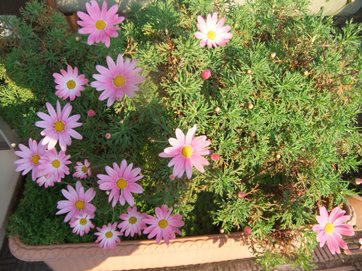 かわいい花.JPG